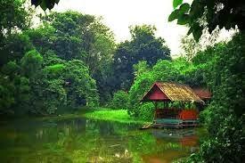 Keindahan Alam Palembang Taman Wisata Punti Kayu Dasbor Hutan Propinsi