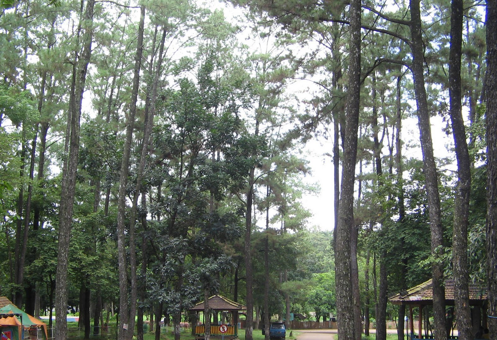 Majalah Dahsyat Palembang Pemkot Ambil Alih Hutan Wisata Punti Kayu
