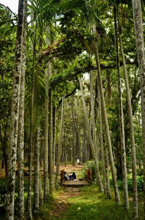 Pagar Pinang Foto Hutan Wisata Punti Kayu Palembang Tripadvisor Alam