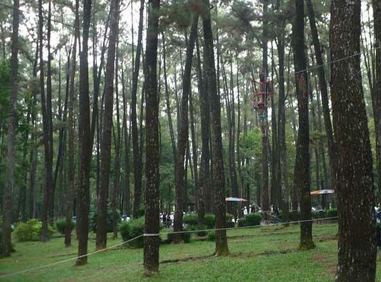 Punti Kayu Tourism Forest Palembang 2018 Photos Tripadvisor Wisata Alam