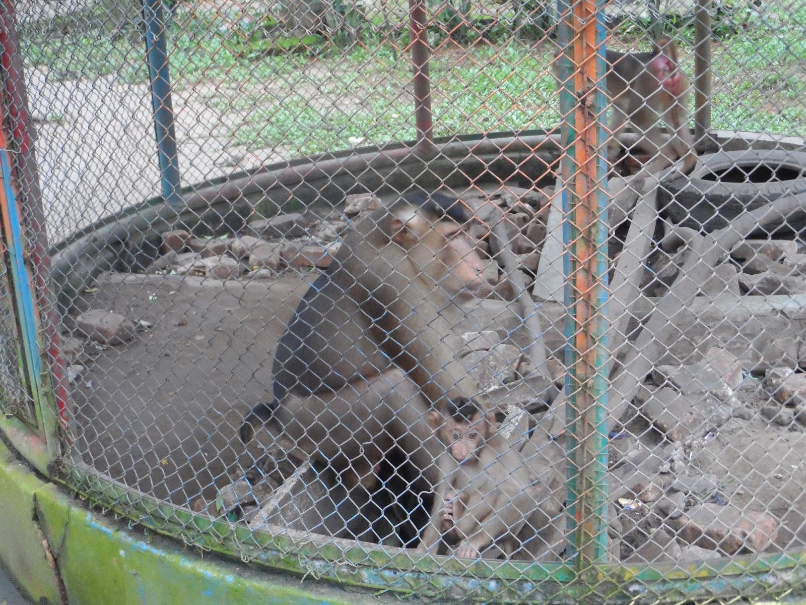 Qolbi Qutbi Hutan Wisata Punti Kayu Palembang Tiket Masuk Waterboom
