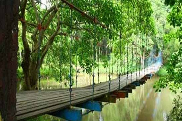 Wisata Alam Hutan Punti Kayu Seru Menyehatkan Jantung Kota Palembang