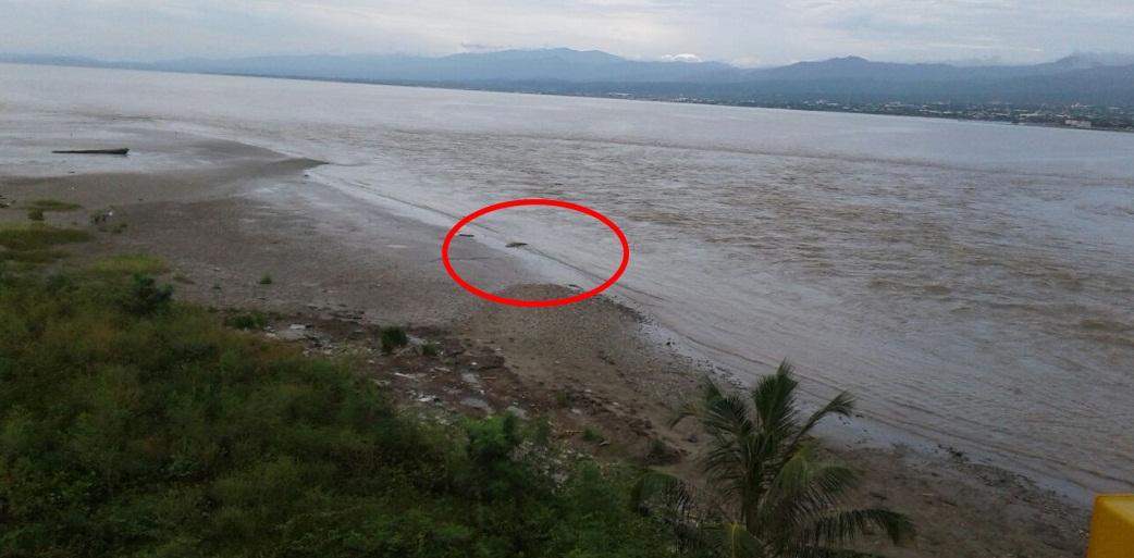 Menikmati Kecil Duduk Diatap Masjid Cms Buaya Muncul Sungai Palu