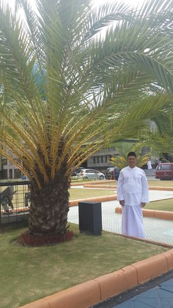 Pohon Kurma Masjid Agung Pekanbaru Foto Mesjid Raya Nur Kota