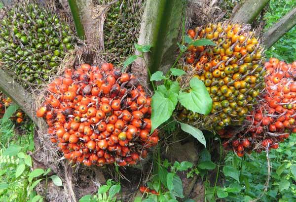 Riau Keramahan Bumi Melayu Sumatra Penghasil Kelapa Sawit Tugu Ikan
