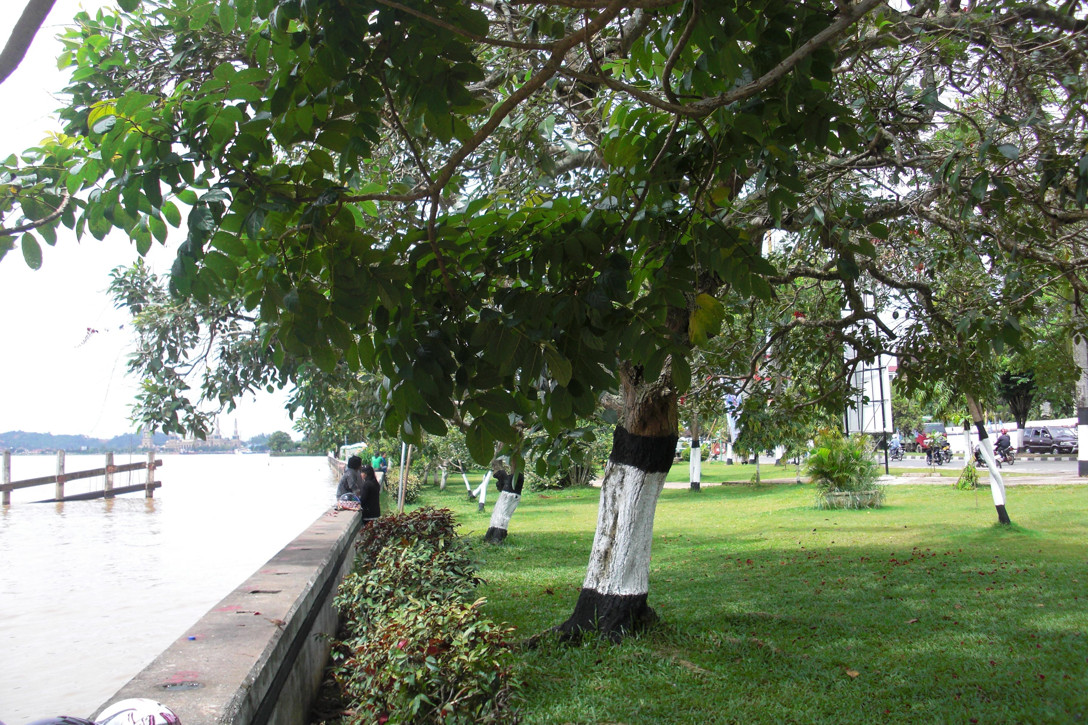 Tepian Mahakam Advanture Blog Taman Patung Pesut Kota Samarinda