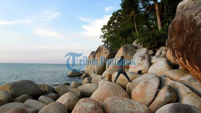Samudera Indah Kura Raksasa Dua Pesona Wisata Pesisir Kalbar Pantai