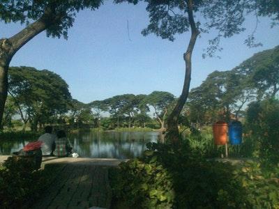10 Gambar Kebun Bibit Wonorejo 1 2 Surabaya Taman Flora