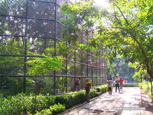 Kebun Bibit Surabaya East Java Indonesia Tropical Paradise Kota