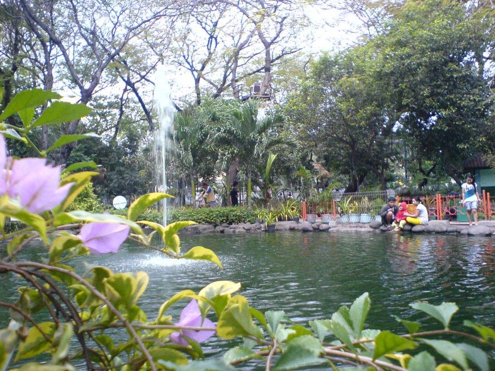Kebun Bibit Surabaya Xplora Id Alam Kota