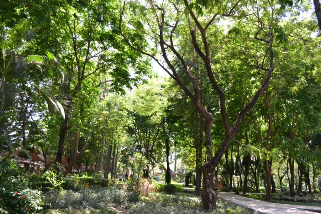 Menikmati Udara Segar Kebun Bibit Wonorejo Surabaya Harianpost Kota
