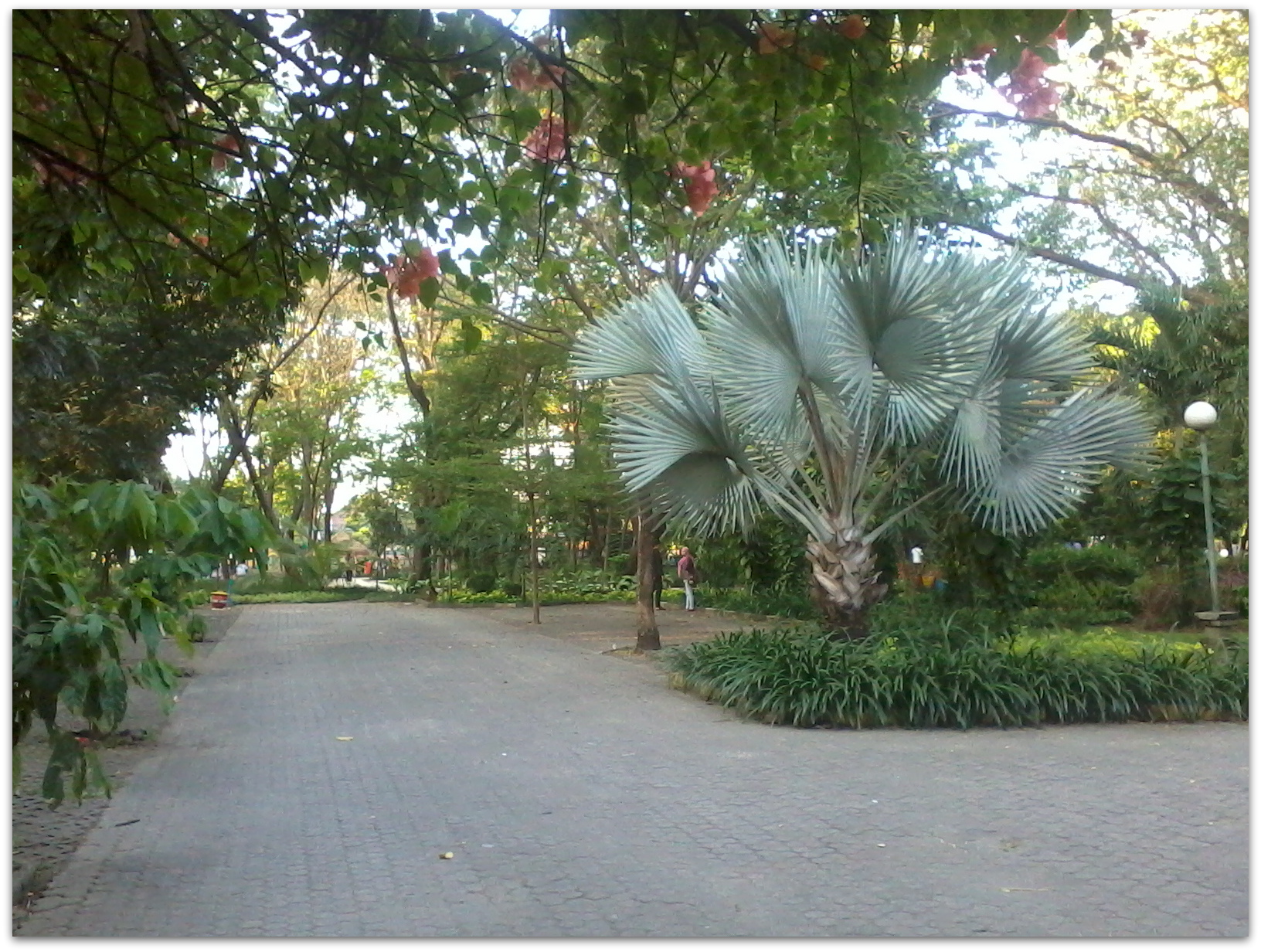 Taman Flora Kebun Bibit Bratang Surabaya Dream Terletak Jalan Lokasinya