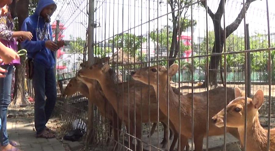 Taman Flora Wisata Murah Meriah Surabaya Lihat Id Fauna Kebun