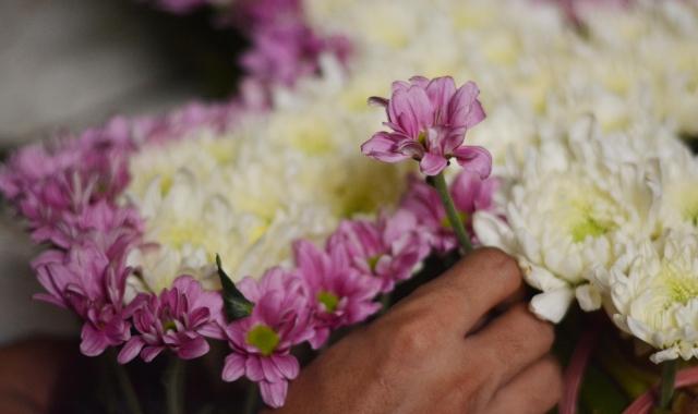 Berbagai Bunga Memikat Pasar Julajuli Bratang Kota Surabaya