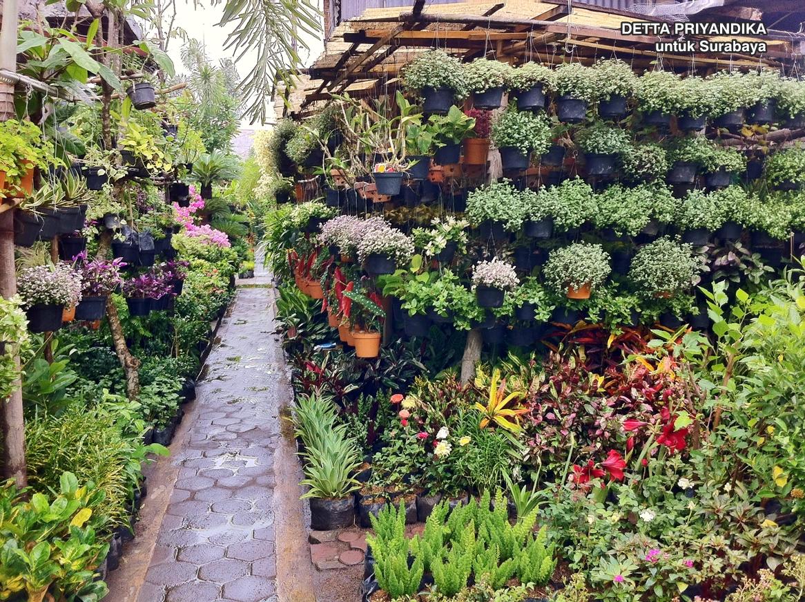 Berwisata Pasar Bunga Bratang Kota Surabaya Adventure