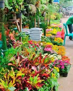 Cari Bunga Kunjungi Pasar Kayoon Surabaya Panduan Bunga48 Rssing Bratang