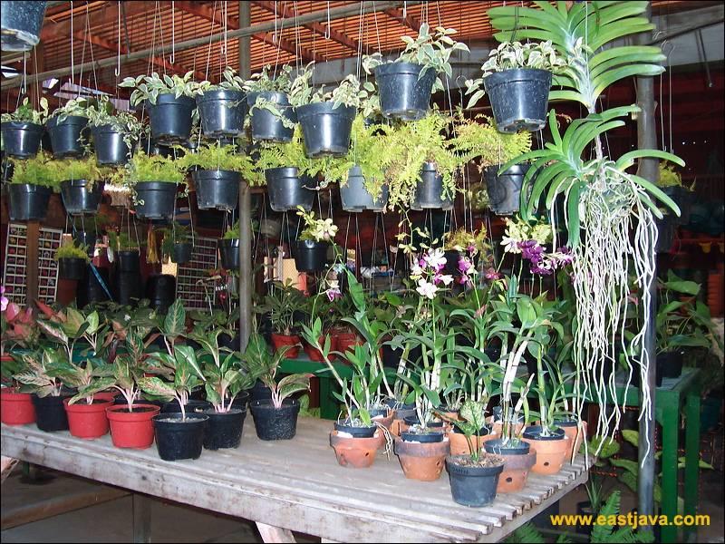 Color Slight Bratang Flower Market Surabaya East Java Location Strategic