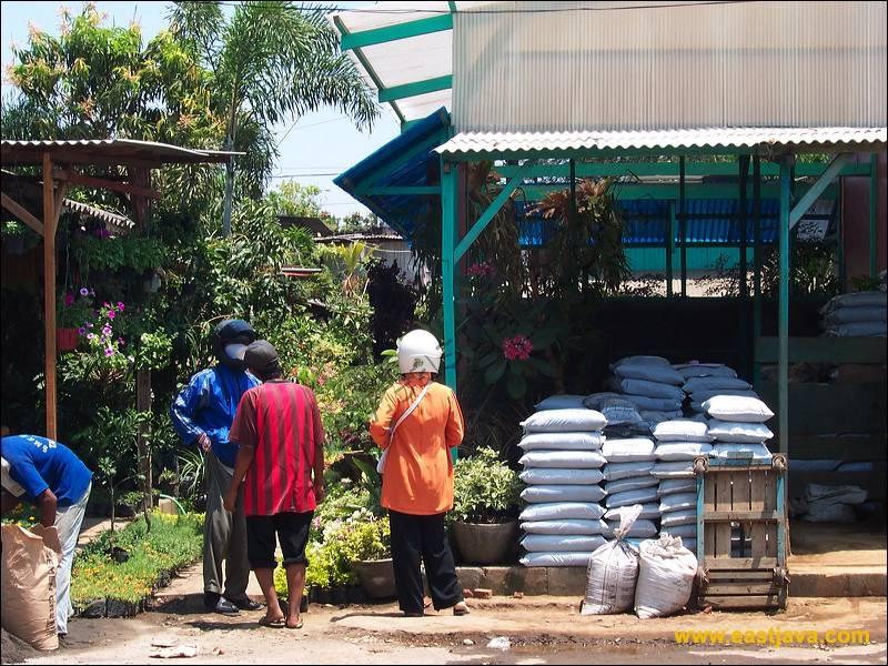 Galeri Foto Pasar Bunga Bratang Kota Surabaya