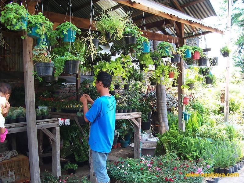 Galeri Foto Pasar Bunga Kayoon Surabaya Flower Market 23 Preview