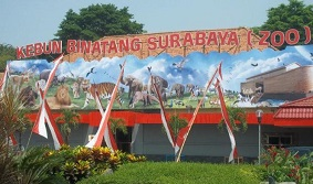 Hotel Sekitar Daerah Pasar Bunga Bratang Surabaya Klikhotel Kebun Binatang