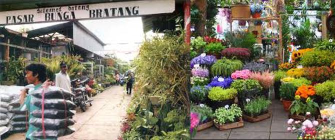Info Obyek Wisata Surabaya Pasar Bunga Bratang Mobil Sewa Tradisional