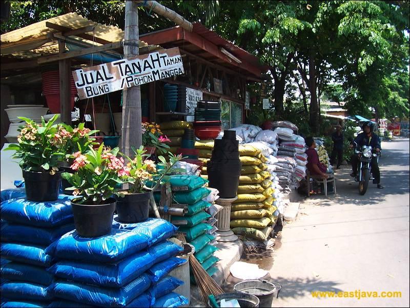 Kayoon Flower Market Surabaya Pasar Bunga Bratang Kota
