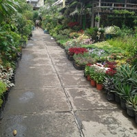 Pasar Bunga Bratang Toko Foto Diambil Oleh Wahyu Ika 5