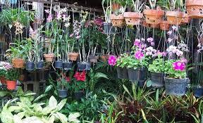 Serunya Wisata Flora Fauna Pasar Bratang Surabaya Panduan Bunga Bratang2