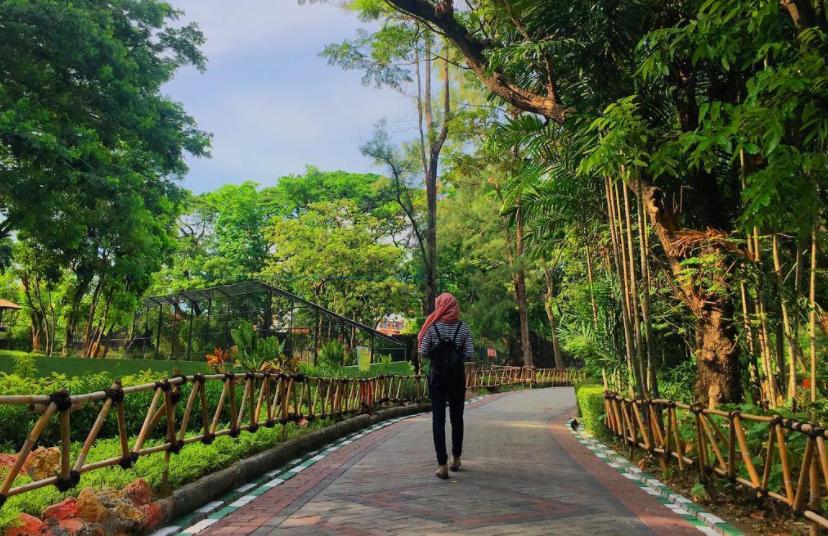 33 Pilihan Tempat Wisata Surabaya Sekitarnya Wajib Kebun Binatang Taman
