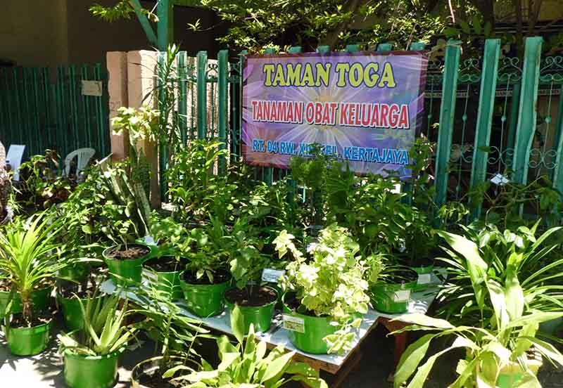 Dkrth Taman Toga Sgc Buah Undaan Kota Surabaya