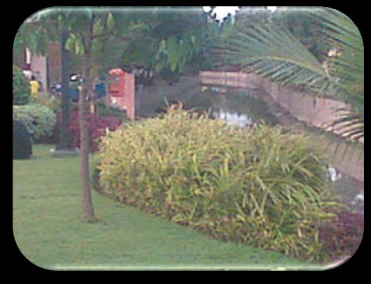 Taman Buah Buahan Pesona Kota Surabaya Undaan Kulon