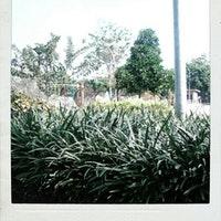 Taman Buah Undaan Foto Diambil Oleh Syamsudin 11 30 2012