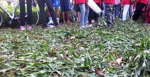 Walikota Surabaya Marah Ang Information Jalur Hijau Tanaman Taman Bungkul