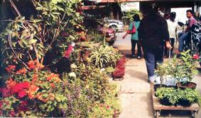 Hotel Sekitar Daerah Taman Mayangkara Klikhotel Pasar Bunga Bratang Surabaya