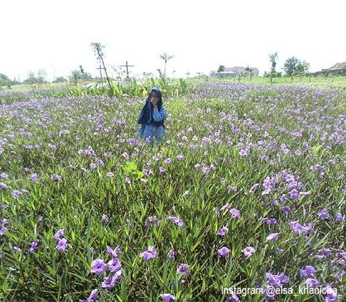 20 Tempat Wisata Surabaya Bagus Terkenal Zona Libur Taman Sakura