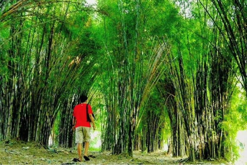 3 Destinasi Unik Surabaya Mirip Jepang Lho Hutan Bambu Keputih