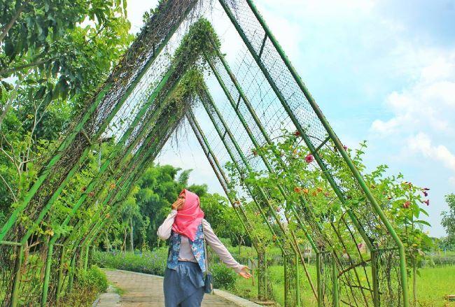 50 Tempat Wisata Surabaya Hits Travelista Taman Sakura Keputih Kota