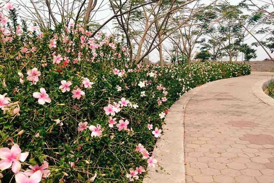 70 Tempat Wisata Surabaya Menarik Wajib Dikunjungi Taman Sakura Keputih