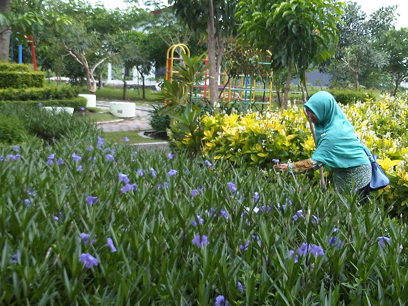 Beautiful Places Surabaya Love Share Sakura Park Taman Keputih Kota