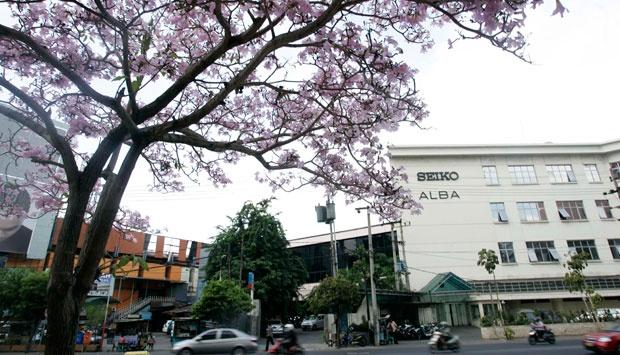 Bni Kucurkan 3 Miliar Taman Sakura Surabaya Nasional Tempo Suasana