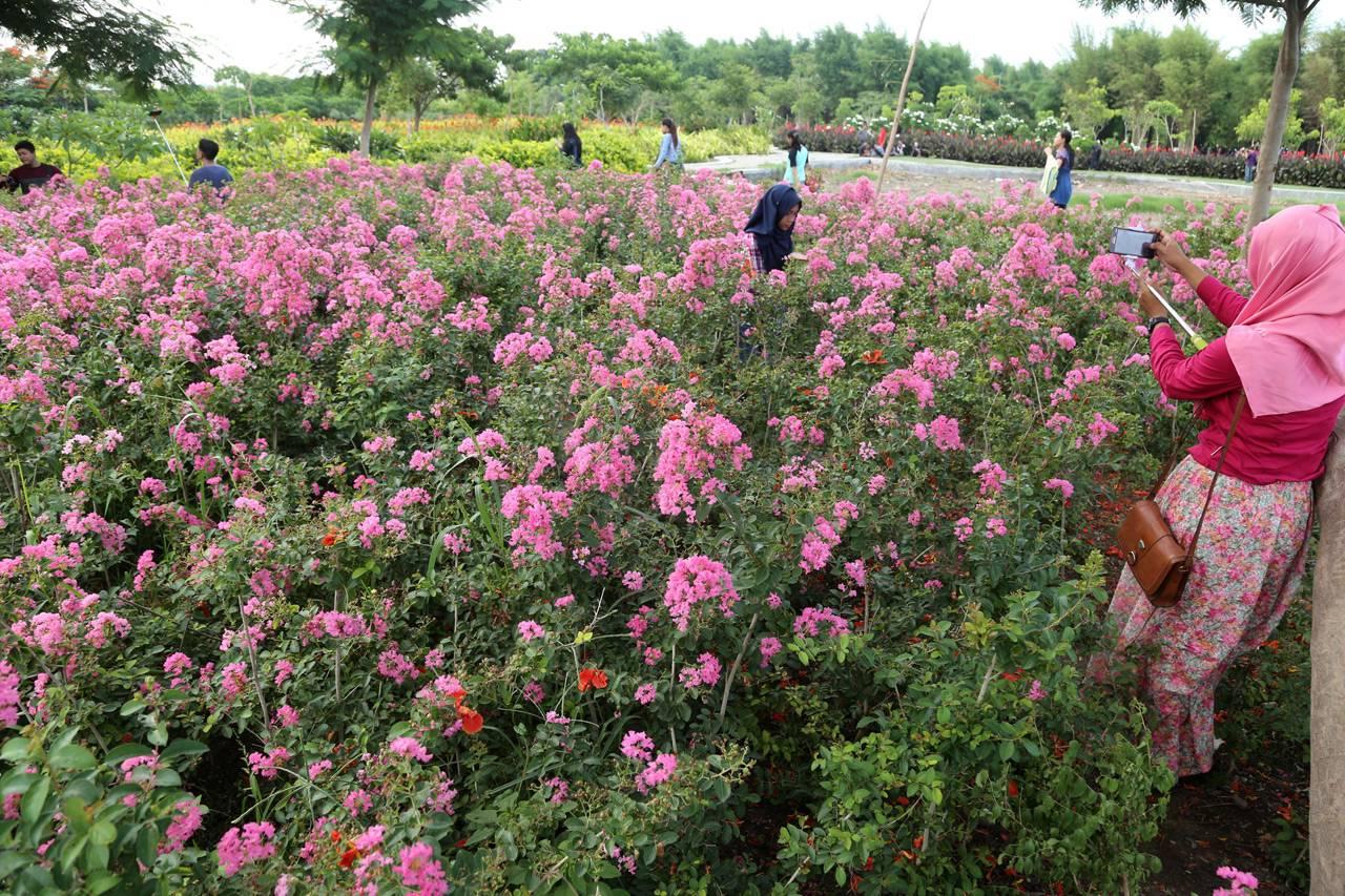 Foto Jadi Tempat Selfie Taman Bunga Keputih Surabaya Terancam Rusak