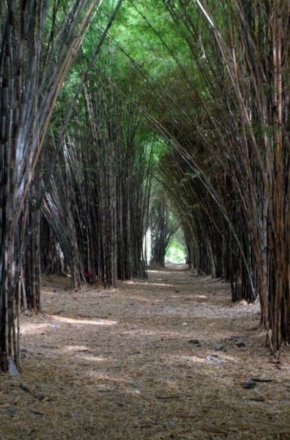 Hutan Bambu Keputih Surabaya Taman Sakura Wisata Terindah Lokasinya Dekat