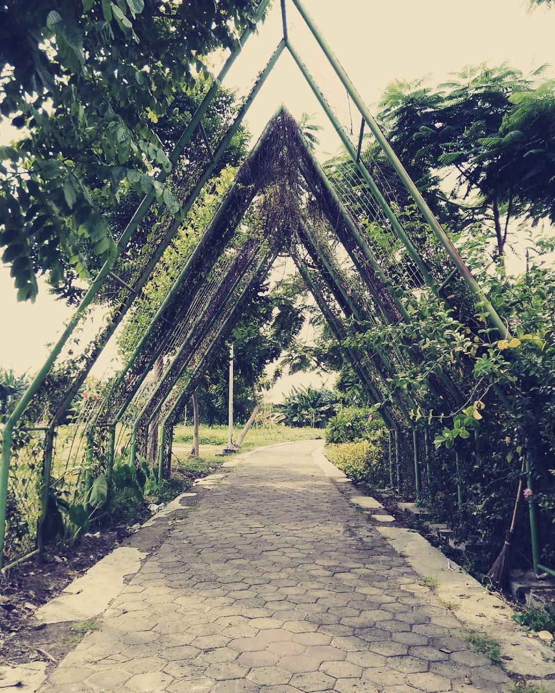 Hutan Bambu Keputih Tpa Berubah Jadi Tempat Wisata Taman Sakura