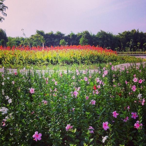 Hutan Bambu Taman Bunga Sakura Surabaya Pengembali Mood Keputih Kota