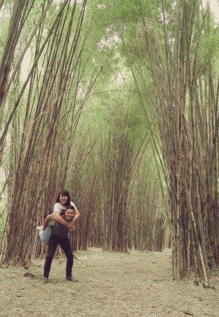 Hutan Bambu Taman Sakura Keputih Sukolilo Surabaya 2018 Kota