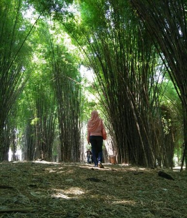 Img 20170416 Wa0060 1 Large Jpg Picture Hutan Bambu Taman