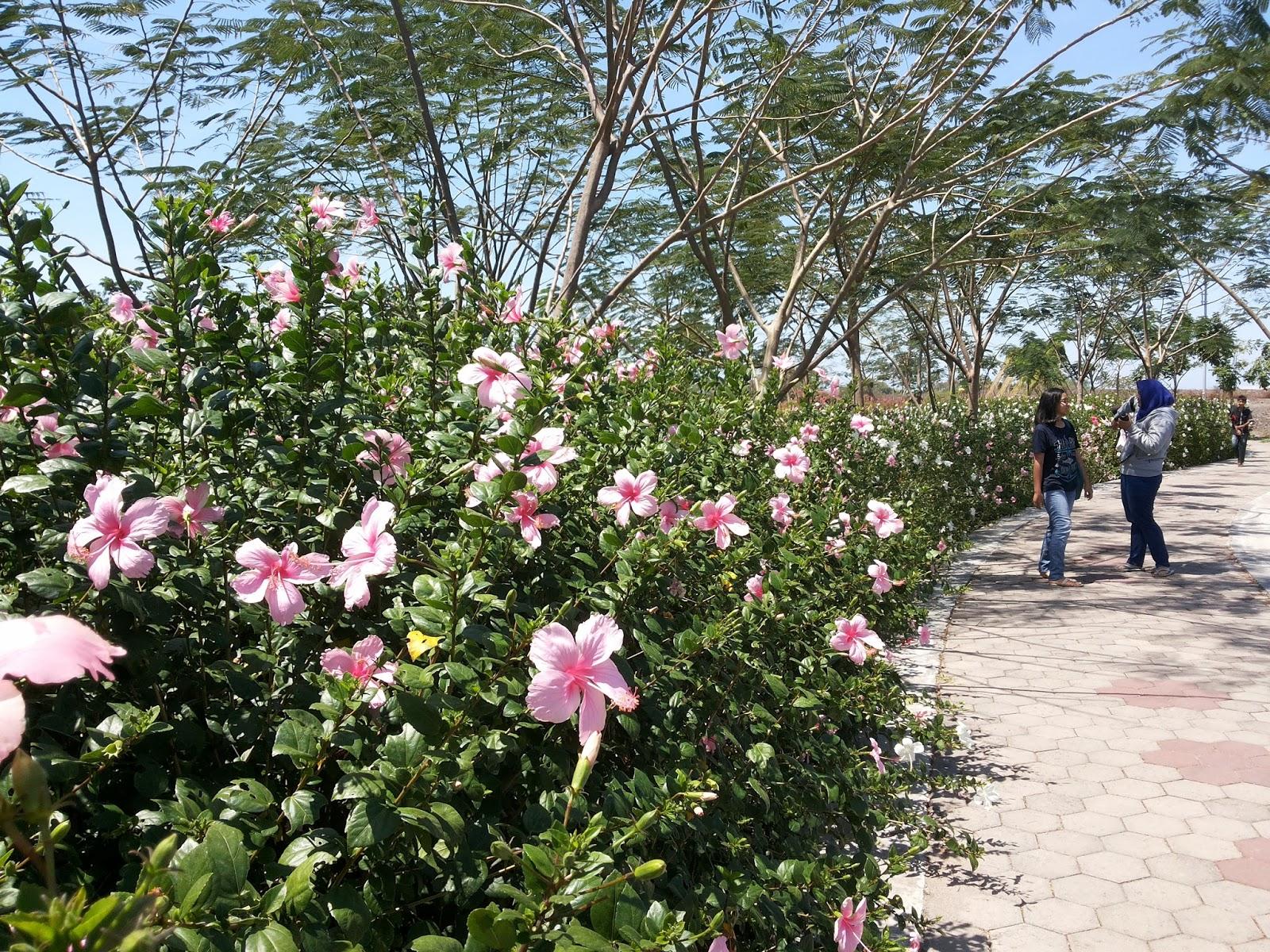 Jouerny Hutan Bambu Taman Sakura Surabaya Keputih Kota