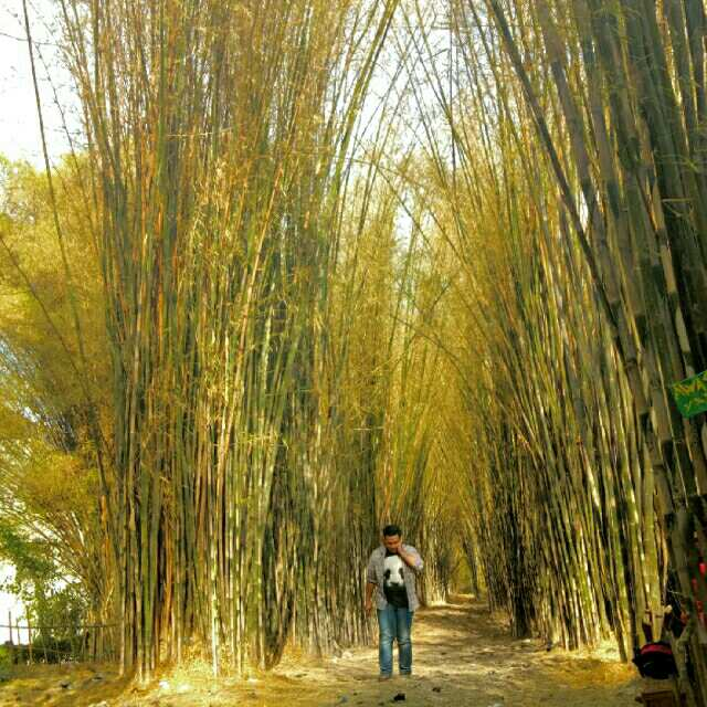 Lokasi Hits Surabaya Hutan Bambu Taman Sakura Keputih Tempat Kota