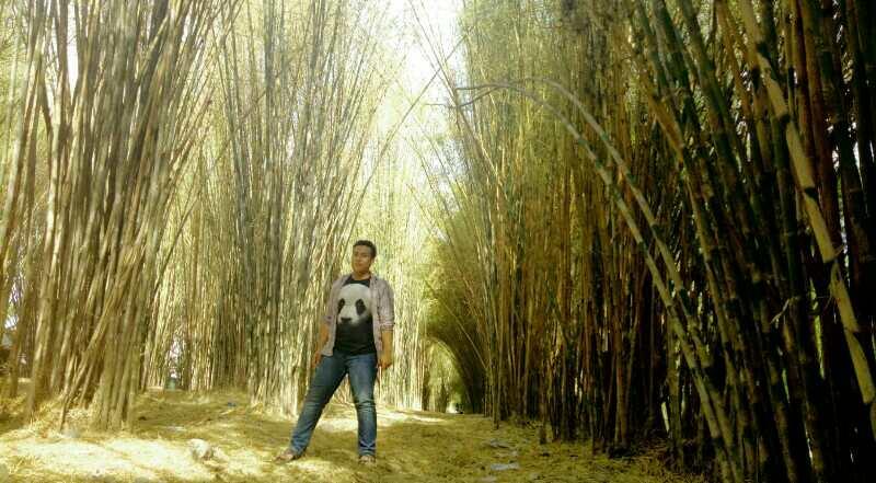 Lokasi Hits Surabaya Hutan Bambu Taman Sakura Keputih Tempat Lokais