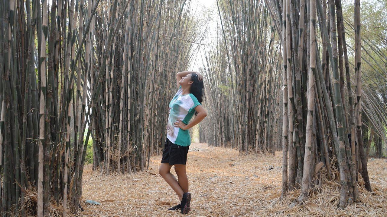 Menyusuri Hutan Bambu Taman Sakura Surabaya Serasa Kyoto Jepang Keputih